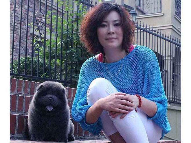 蓝色松狮犬图片文文和松狮幼犬母蓝色松狮犬图片