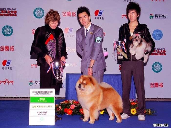 07.12.8HOPE获长沙FCI中国冠军展BOB BIG2挑战成犬成功图片