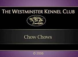2006美国西敏寺松狮比赛视频AKC CHOW CHOW DOG SHOW图片