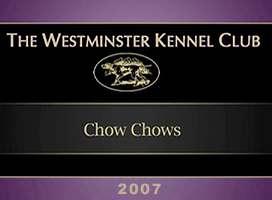 松狮视频2007美国西敏寺松狮比赛视频AKC CHOW CHOW DOG SHOW