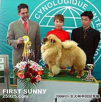 松狮冠军2006FCI全犬种中国冠军展松狮犬冠军FIRST SUNNY