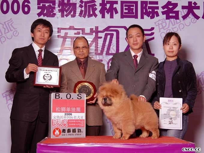 FIRST JJ2006年宠物派杯松狮单独展获得全场BOS图片