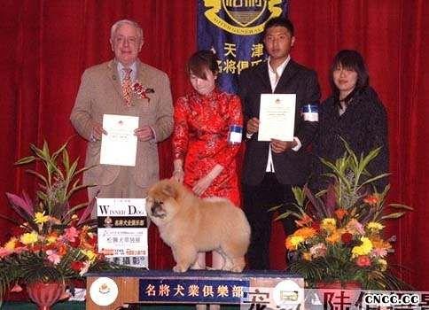 07.04.20HOPE获名将金项圈冠军争霸赛松狮幼犬WD图片