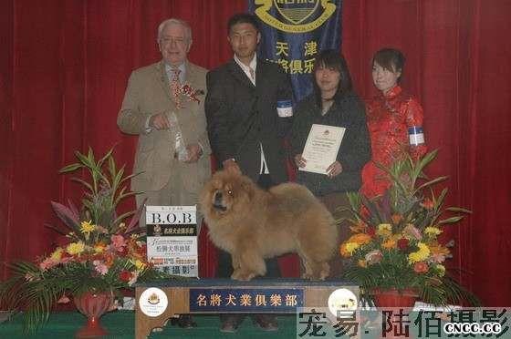 07.04.20小酸妞获第三届名将金项圈松狮单独展冠军BOB图片
