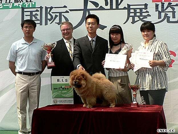 07.5.7FIRST金小欣济南获得全场总冠军BIS松狮冠军图片