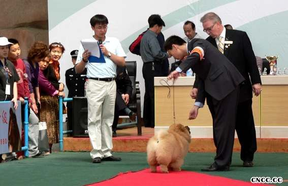 07.5.7FIRST金小欣济南获得全场总冠军BIS松狮冠军