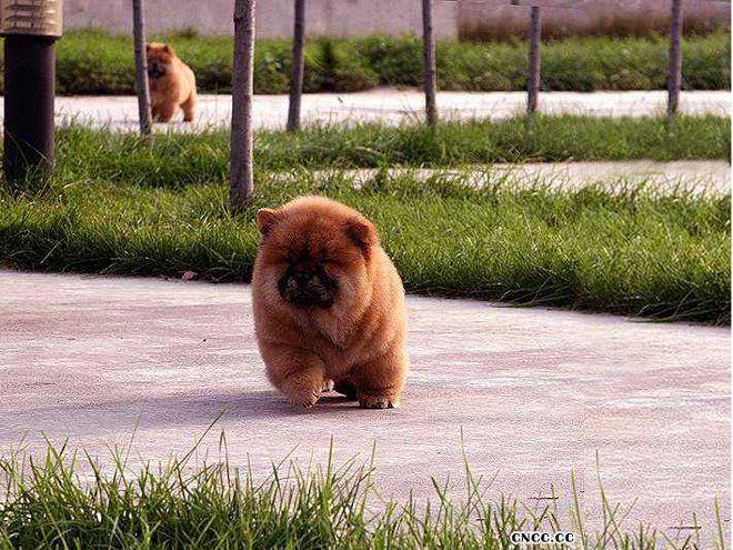 北京宠物寄养价格20元/天单圈寄养户外运动6小时图片