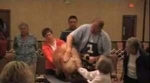 美国MICHAEL讲松狮犬比赛美容方法视频图片