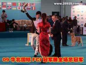 09年FCI全犬种国际冠军展黑牛获全场总冠军BIS一集图片