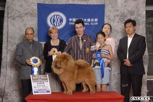 2008.5.17日天意获CKC苏州全犬种赛全场总冠军图片