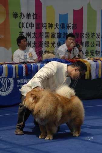 2008.5.17日天意获CKC苏州全犬种赛全场总冠军