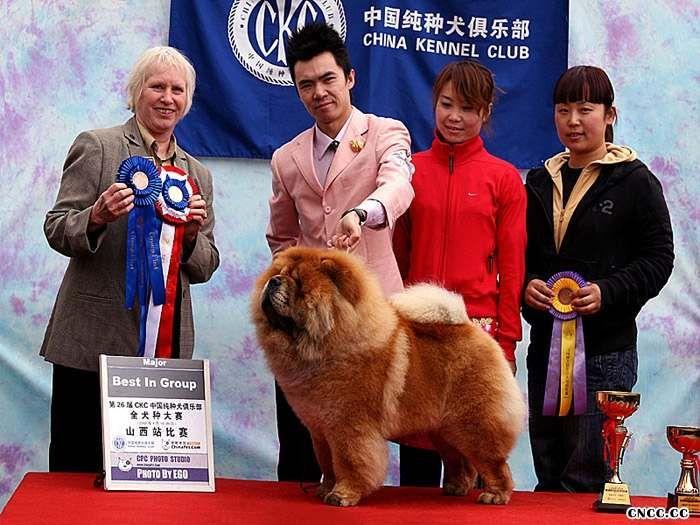 松狮冠军08.04.19FIRST CASH获CKC太原全犬种赛松狮冠军
