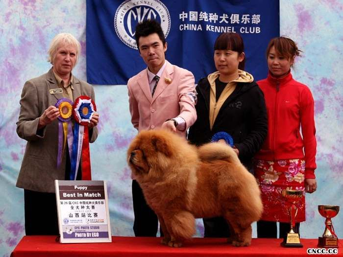 08.04.20KING获26届CKC太原站全场总冠军BIS图片