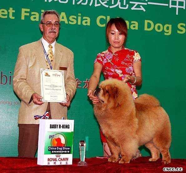 2008.9.6日LEADER获亚洲宠物展犬王和松狮冠军图片