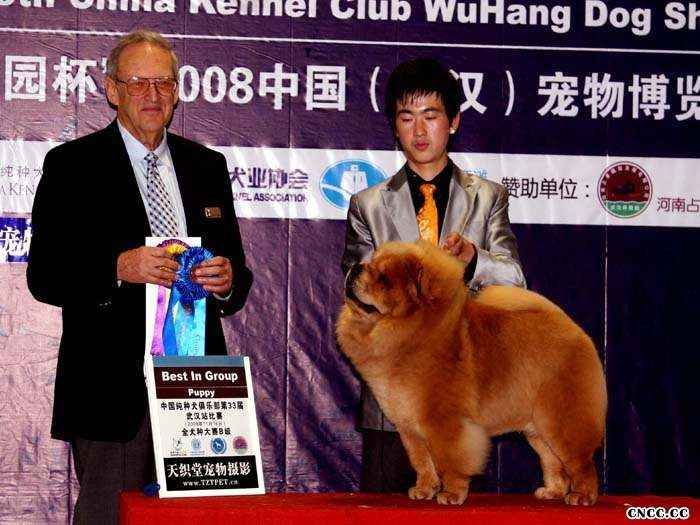 08年11月16日统帅获中国武汉宠物博览会松狮冠军图片