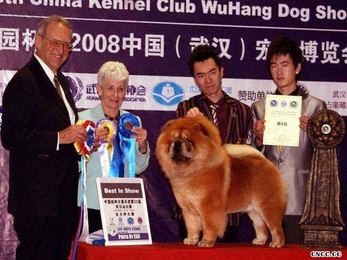 2008.11.15日小现金获第33届CKC武汉站全场总冠军BIS