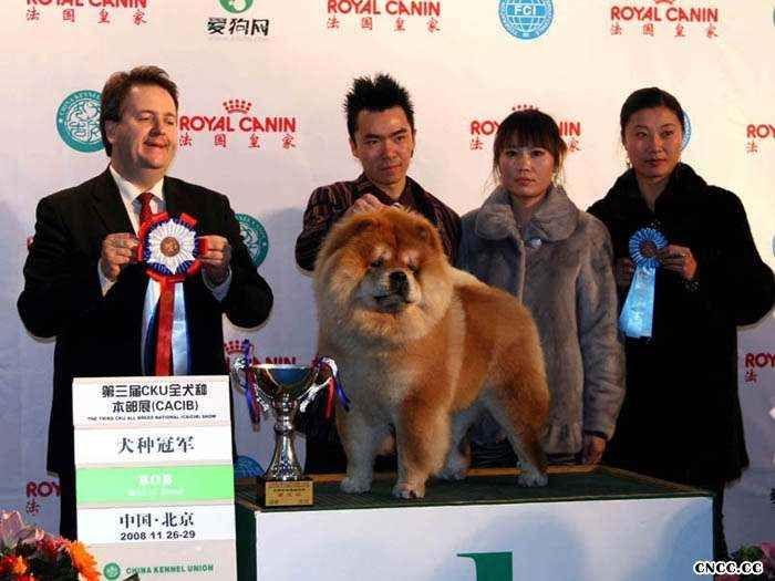 2008.11.28HOPE获第三届CKU全犬种本部展松狮冠军图片