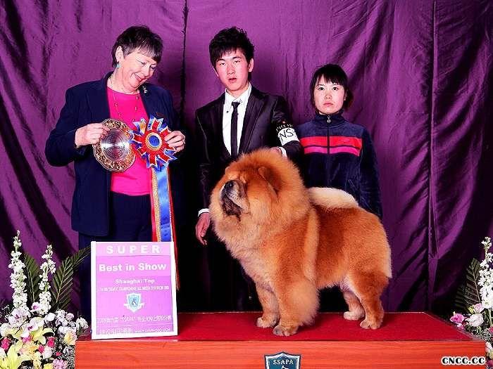 松狮冠军09.3.8上海6个松狮冠军5个全场总冠军BIS包揽超级BIS