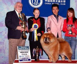 08.03.16CKC全犬种比赛FIRST CASH获全场总冠军图片
