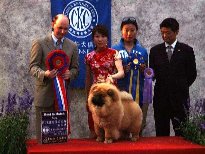 09.5.10日第三届苏州国际名犬展小现金获松狮犬冠军图片