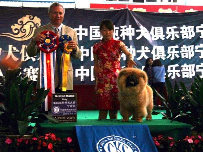 09年5月17日第40届CKC宁波站战神获全场总冠军BIS图片