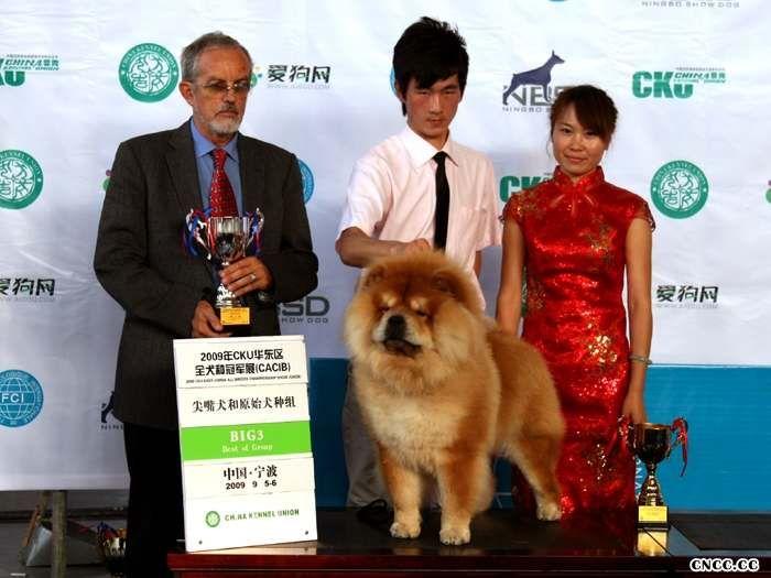 2009.9.5-6FCI华东区全犬种国际冠军展HOPE获松狮冠军图片