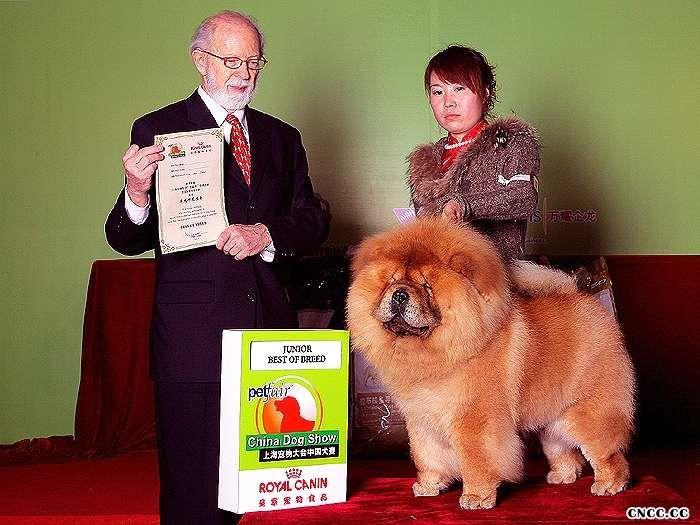 10年3月13日-14日上海宠物大会战神获2个非运动组冠军图片