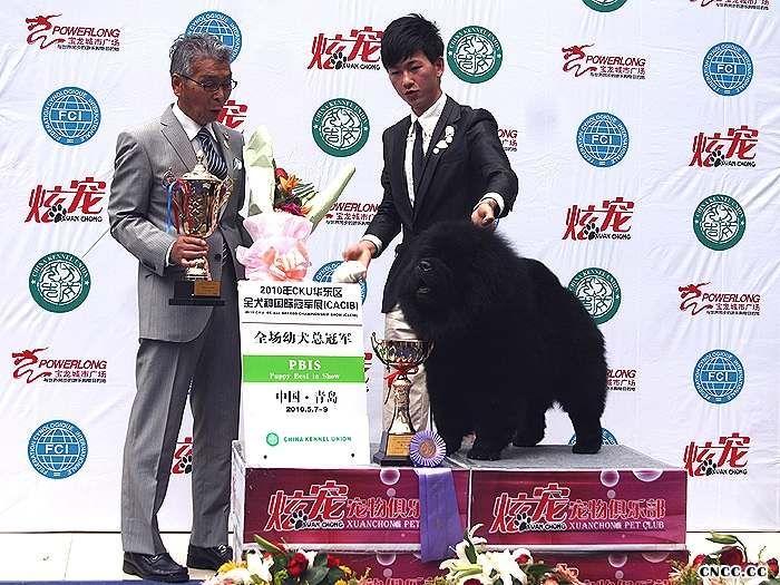 2010.5.9黑金获青岛FCI国际冠军展CACIB全场总冠军BIS