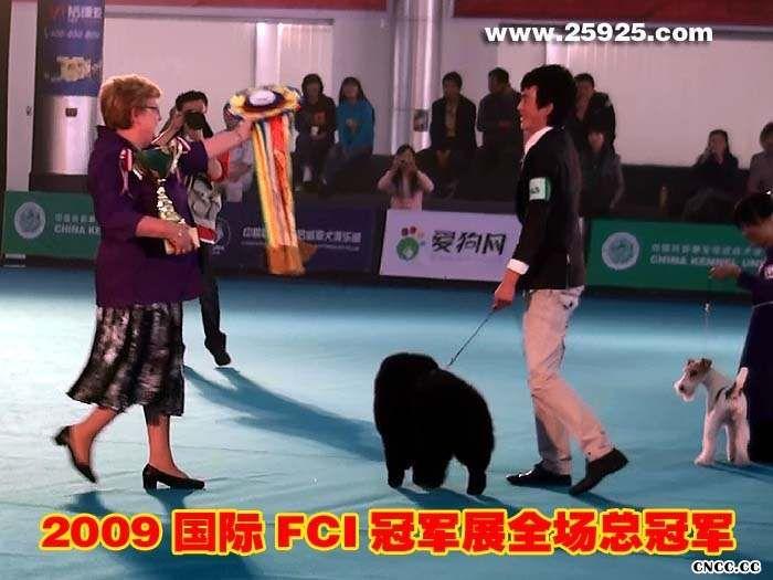松狮冠军09.10.24FCI中国冠军展CACIB黑牛获全场总冠军BIS