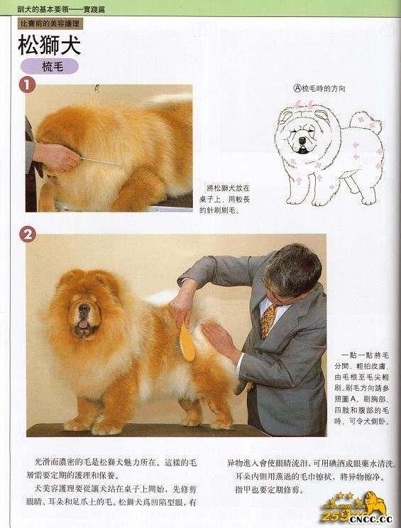 松狮犬比赛美容 松狮犬梳理毛发方法图例