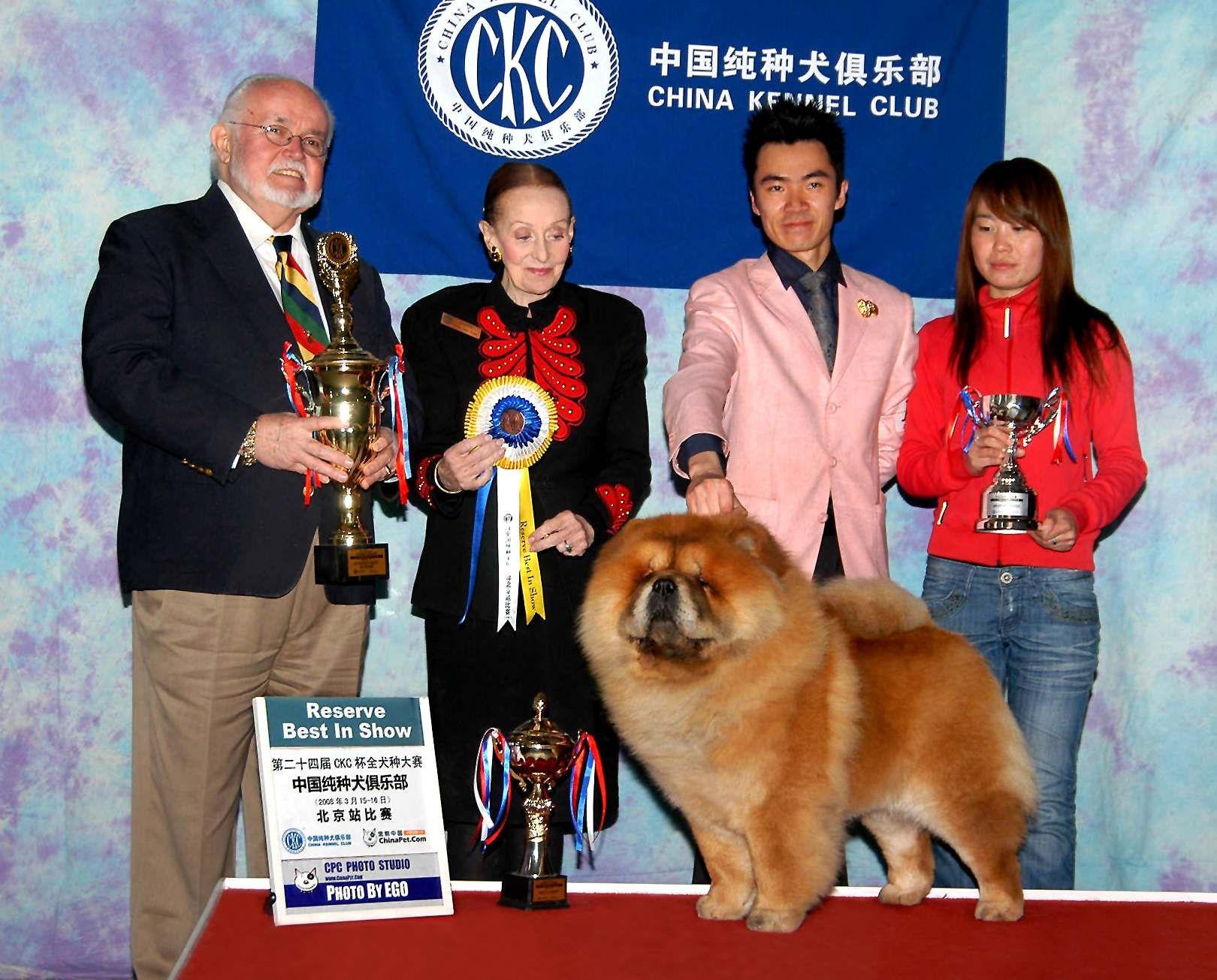 松狮犬高清图片小现金FIRST CASH获北京CKC全犬种比赛全场总冠军