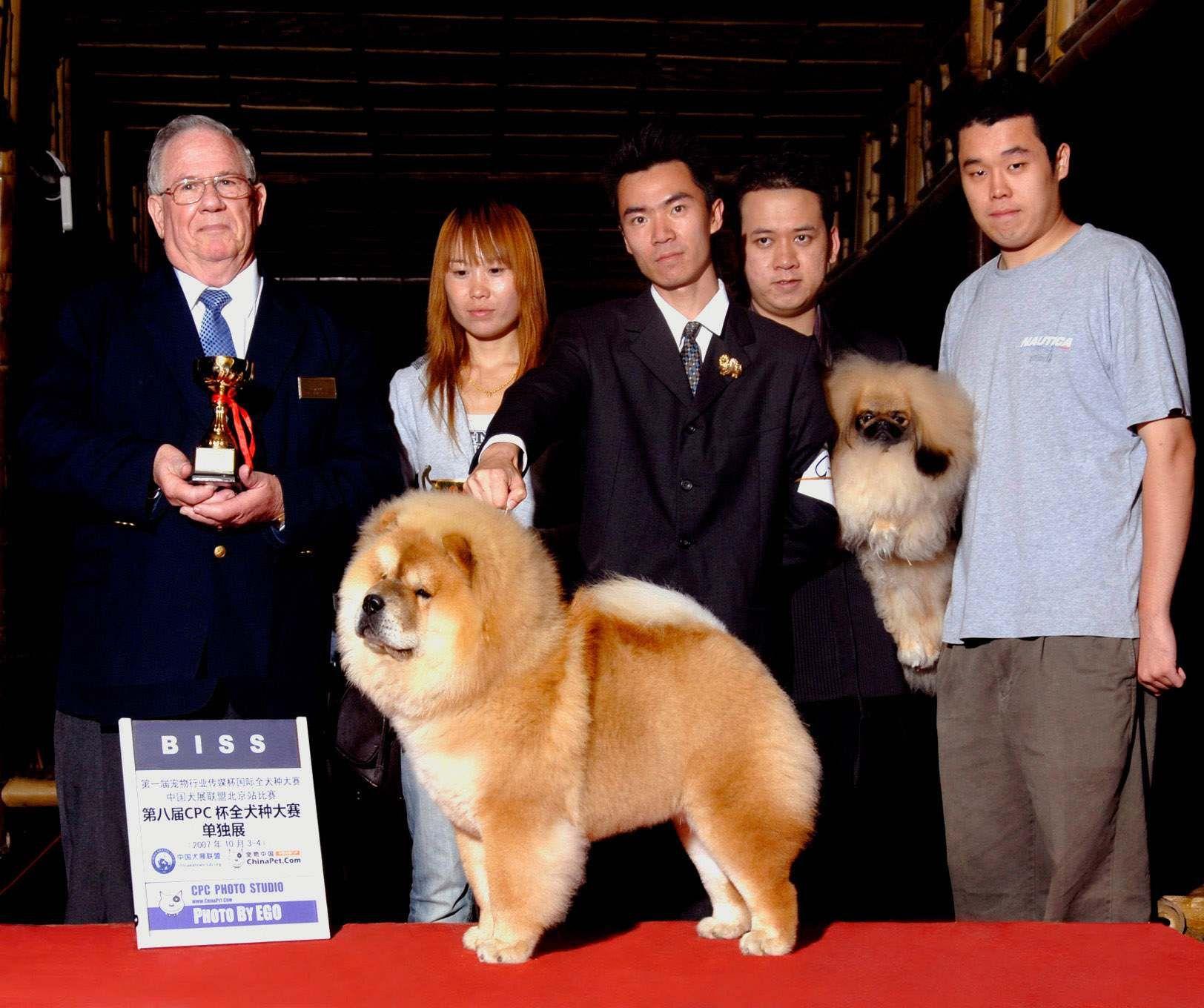 松狮犬高清图片07.10.4日HOPE获宠物派松狮单独展松狮总冠军BISS