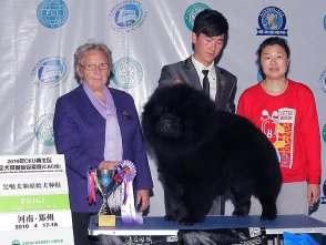 黑金获郑州FCI国际冠军展BIG2松狮冠军图片