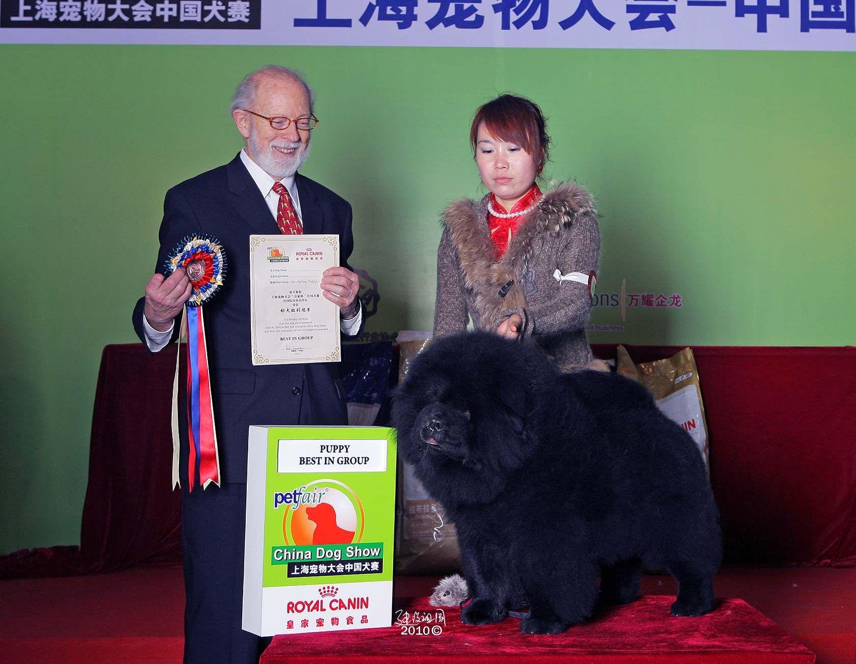 松狮图片中国犬赛黑金获全场总冠军BIG
