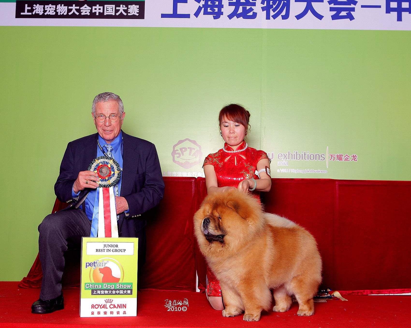 上海宠物大会战神获非运动组冠军BIG图片