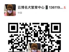 上海云博名犬繁育中心出售纯种柴犬包健康
